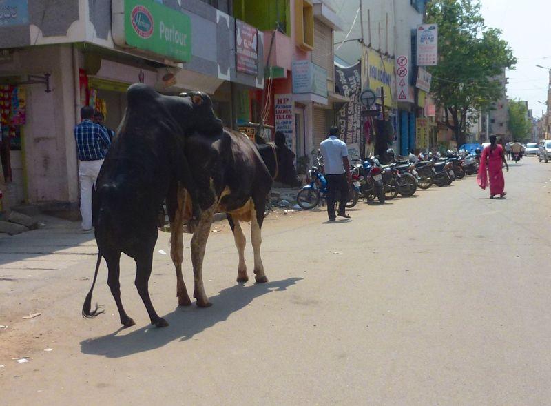 Bangalore India 36