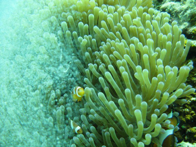 Borneo scuba 12
