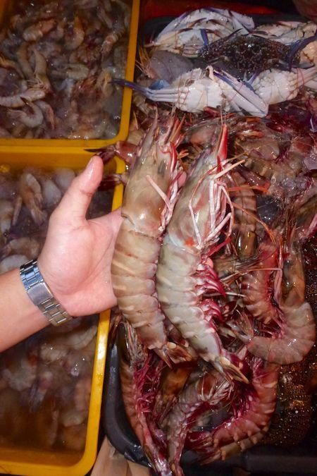 Borneo scuba 28