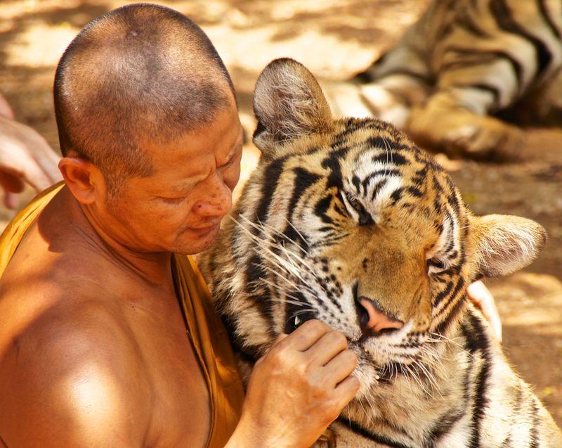 Tiger park 8