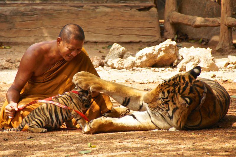 Tiger park 5