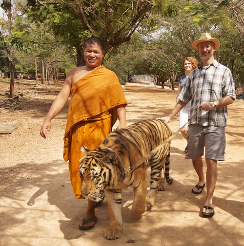 Tiger temple 105