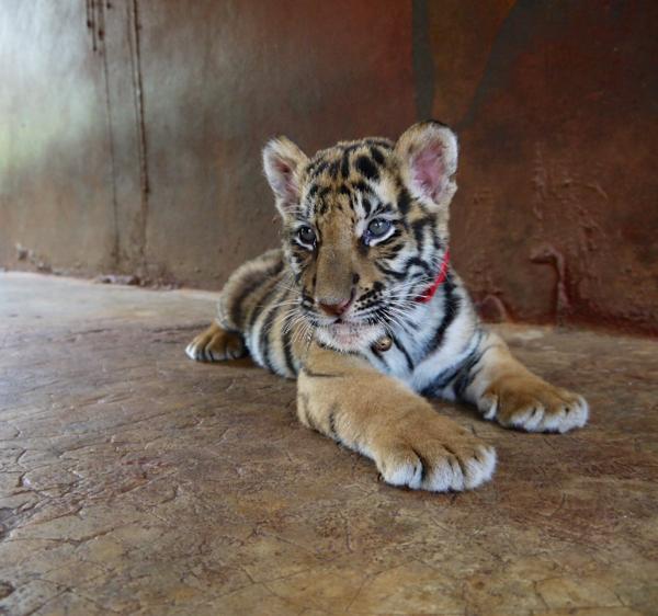 Tiger park 25