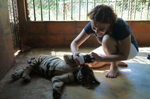 Tiger park 27