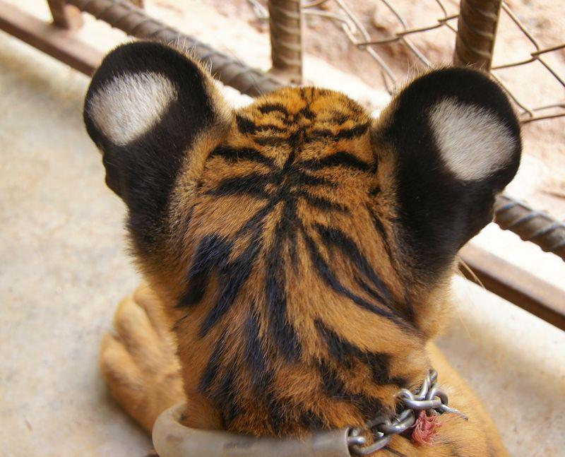 Tiger park 3