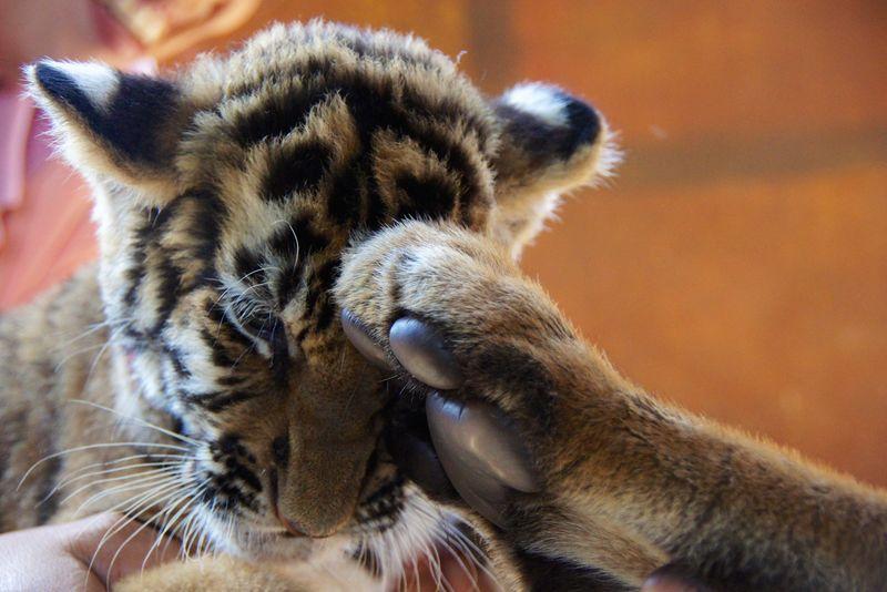 Tiger park 19
