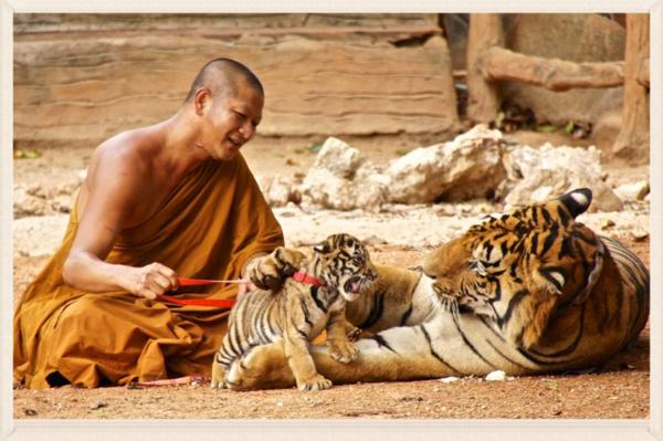 Tiger park 4