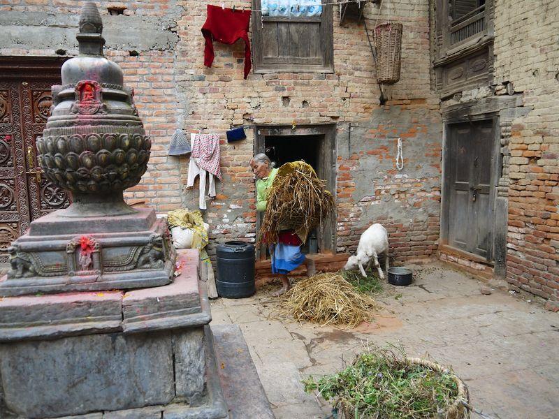 Nepal pink 532