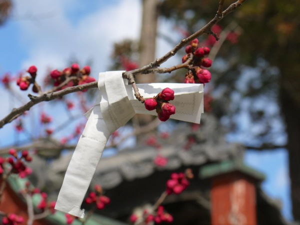 Japan 2014 97