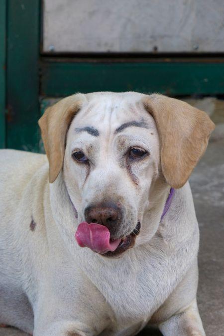 Dog with make up 5