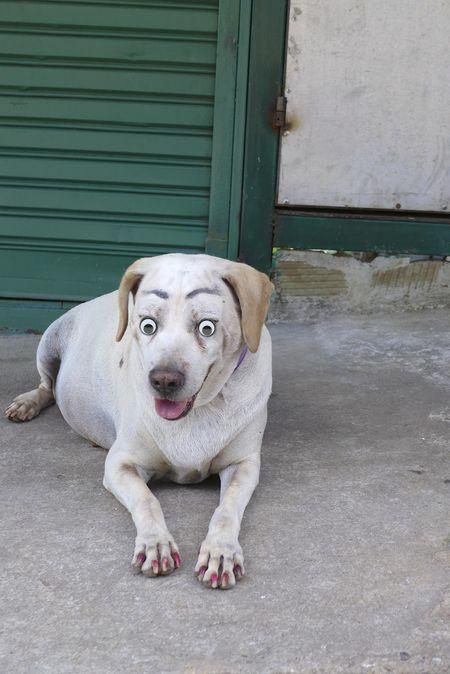 Dog eyed
