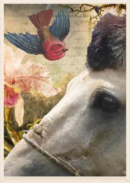Horse_edited-1