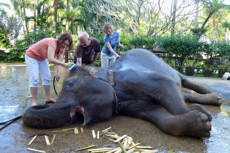 Bali elephants 2