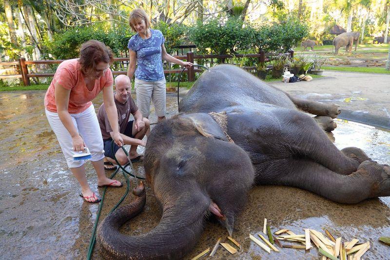 Bali elephants 3