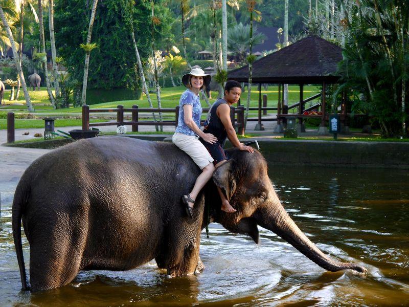 Bali elephants 5