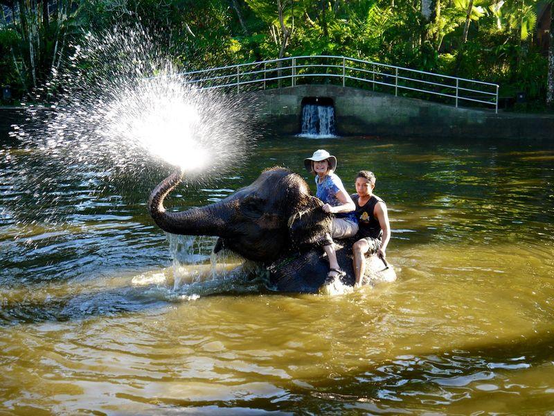 Bali elephants 7