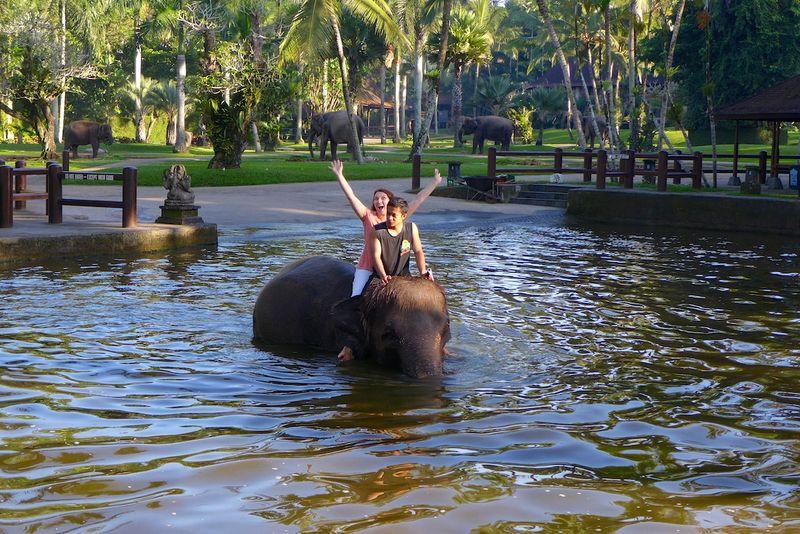 Bali elephants 8