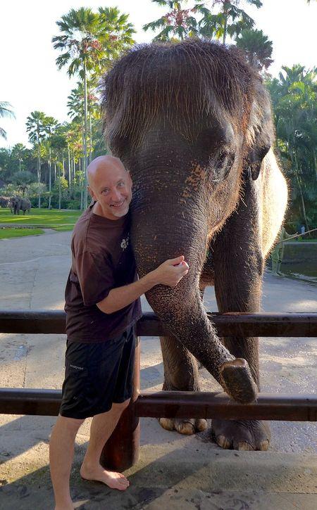Bali elephants 22
