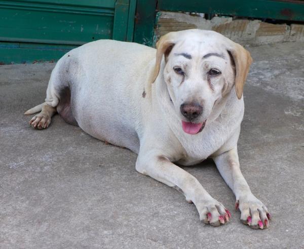 Dog with make up 4