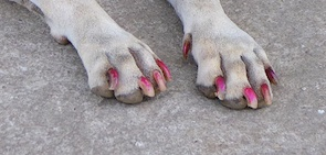 Dog with make up 3