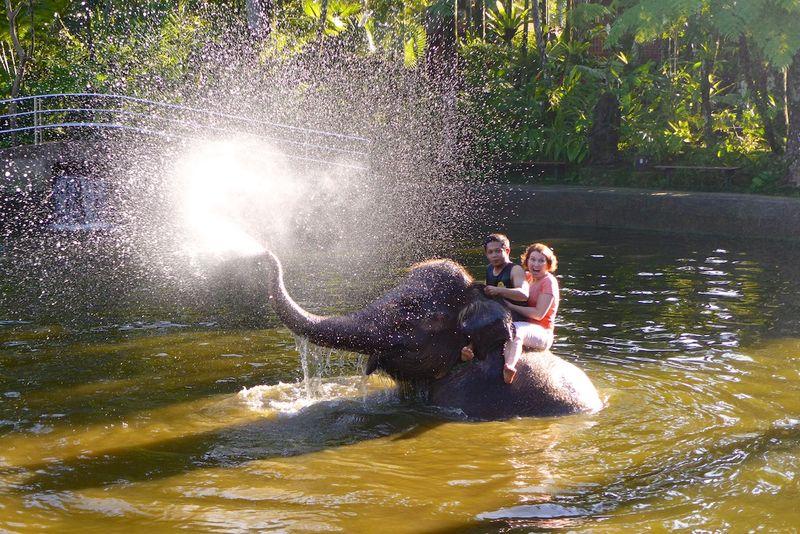 Bali elephants 9