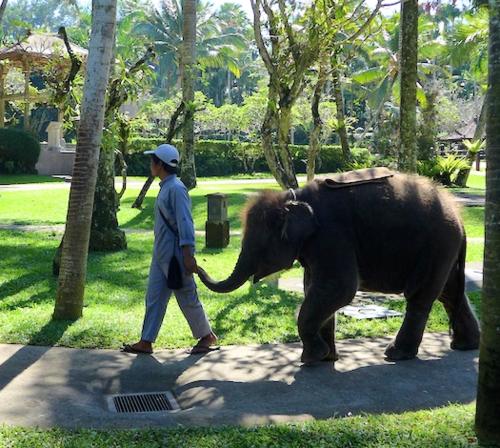 Bali elephants 26