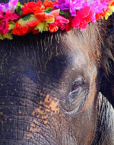 Bali elephants 25