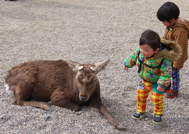 Japan 2014 104