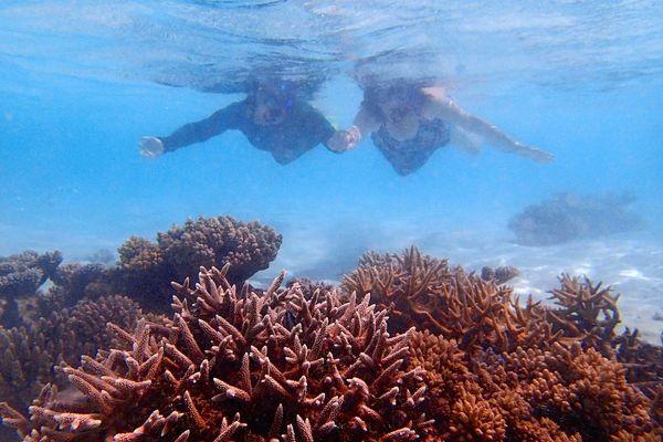 Snorkle - the maldives 5