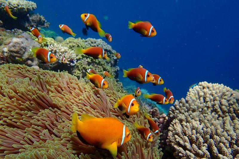 Snorkle - the maldives 2