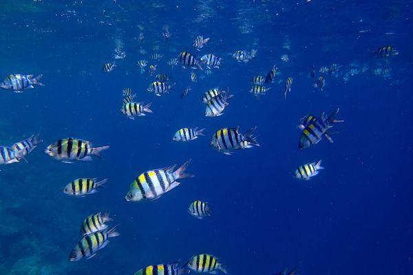 Snorkle - the maldives 3