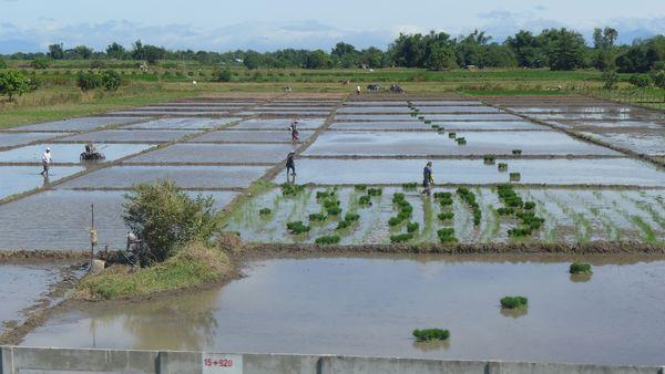 Philippines 2014 26