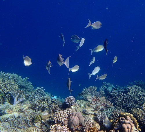 Snorkle - the maldives 8