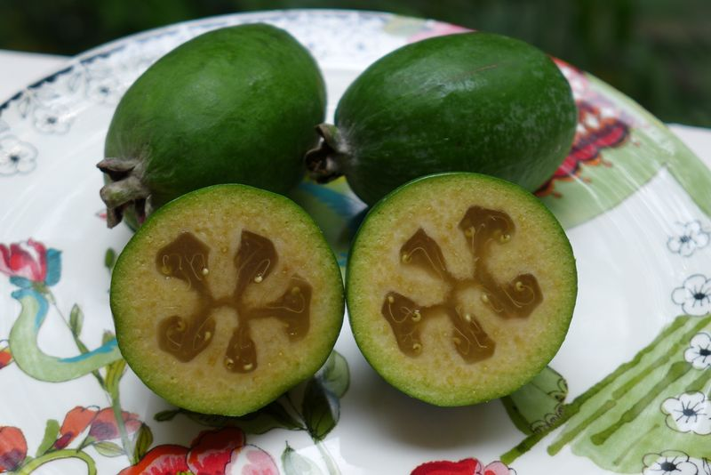 Zeijoa fruit3