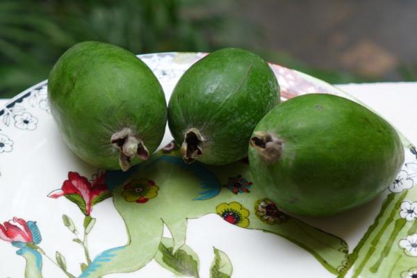 Zeijoa fruit1
