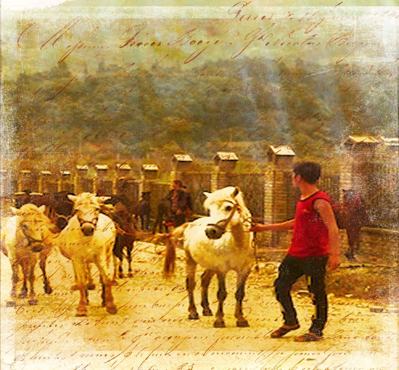 At the market_edited-1