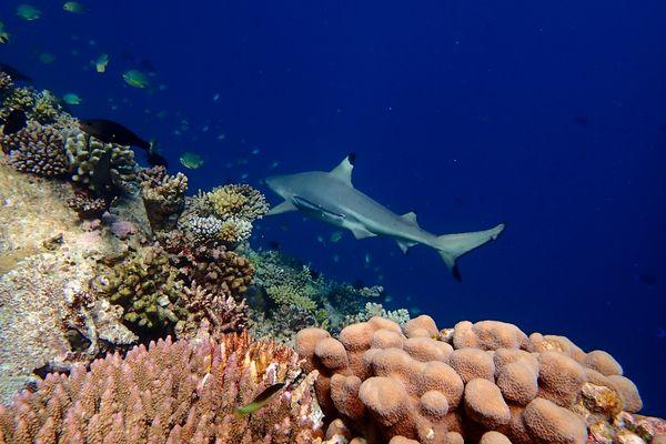 Snorkle - the maldives 9