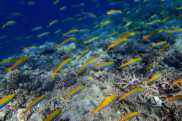 Snorkle - the maldives 11