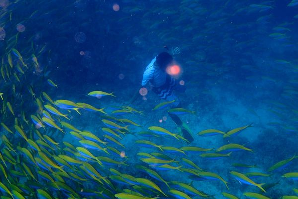 Snorkle - the maldives 12