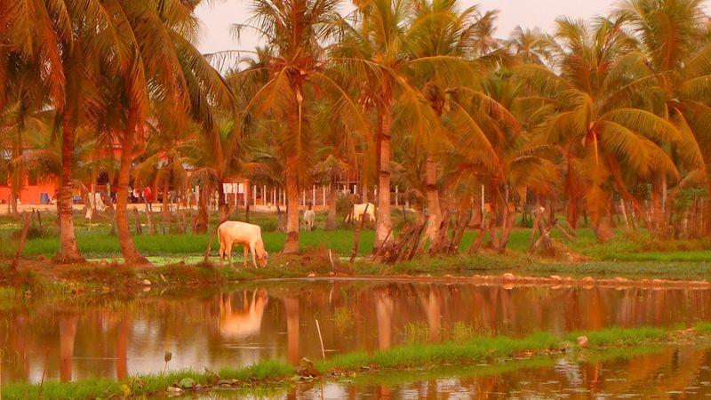 Cambodia girls trip 70