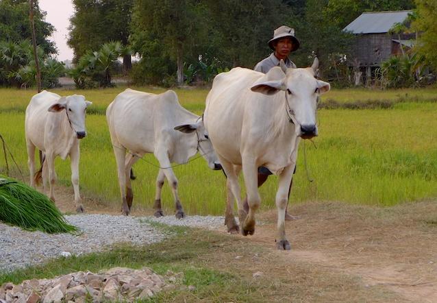 Cambodia girls trip 76
