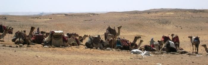 Line_of_camels_3